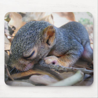 Baby Squirrel Sleeping Mouse Pad