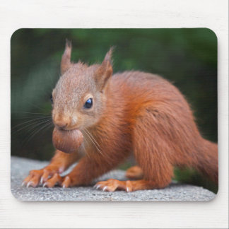 Baby Squirrel with Nut Mousemat Mouse Pad
