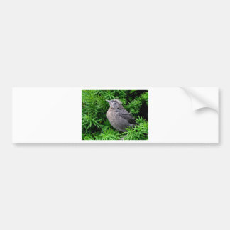 Baby Starling Bumper Sticker