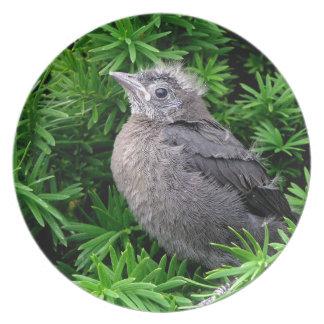 Baby Starling Melamine Plate