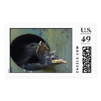 baby starlings stamps