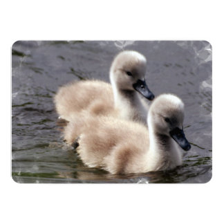 Baby Swans 5x7 Paper Invitation Card