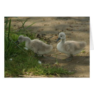 baby swans greeting card