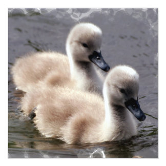 Baby Swans Invitation
