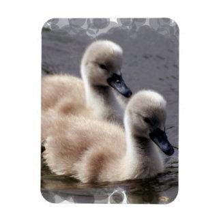 Baby Swans Premium Magnet Vinyl Magnets