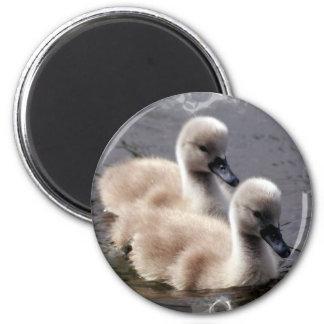 Baby Swans Round Magnet