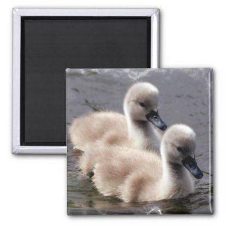 Baby Swans Square Magnet Refrigerator Magnets