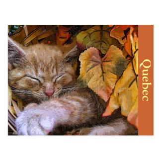 Baby Tabby Kitten Catnapping, Kitty Cat, Quebec Postcard