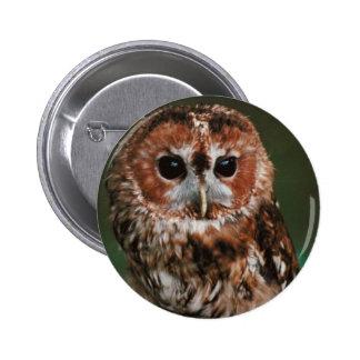 Baby Tawny Owl 2 Inch Round Button