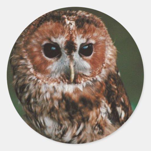 Baby Tawny Owl Round Sticker