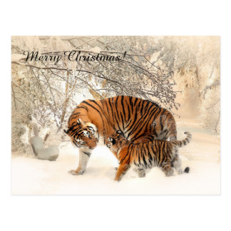 Baby tiger and Tiger mom in a snowy forest Postcard