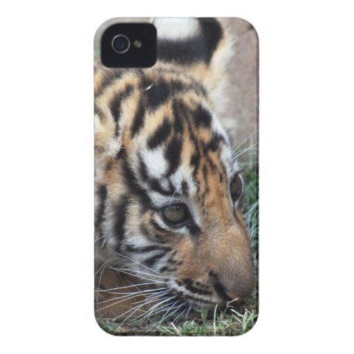 Baby Tiger cub lying down Case-Mate iPhone 4 Case
