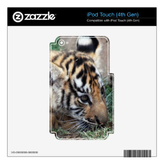 Baby Tiger cub lying down iPod Touch 4G Decal