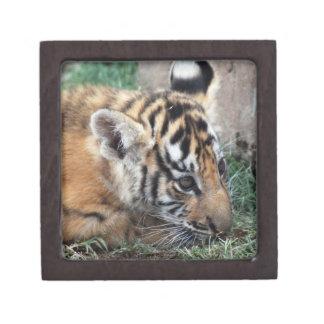 Baby Tiger cub lying down Jewelry Box