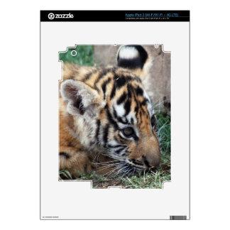 Baby Tiger cub lying down iPad 3 Decal