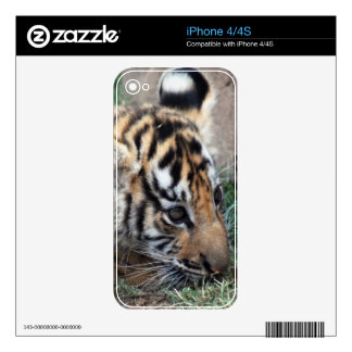 Baby Tiger cub lying down Decal For iPhone 4
