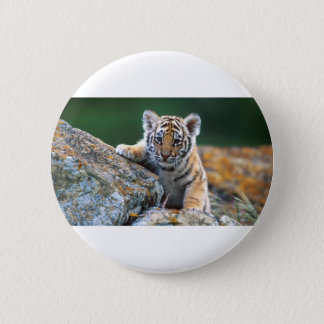 Baby Tiger Cub Pinback Button