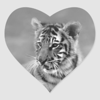 Baby Tiger in Black and white Heart Sticker