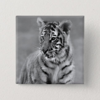 Baby Tiger in Black and white Pinback Button