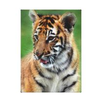 Baby Tiger in color Canvas Print