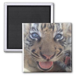 Baby Tiger Magnet