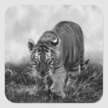 Baby Tiger stalking in Black and white Square Sticker