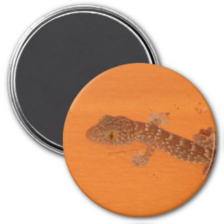 Baby Tokay Gecko 3 Inch Round Magnet