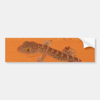 Baby Tokay Gecko Bumper Sticker