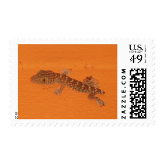Baby Tokay Gecko Stamps