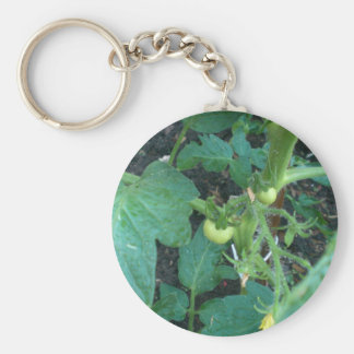 Baby Tomatoes on tree Basic Round Button Keychain