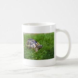 Baby Tortoise Coffee Mug