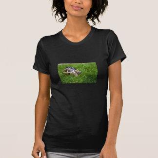 Baby Tortoise T-Shirt
