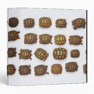 Baby tortoises arranged in rows binder