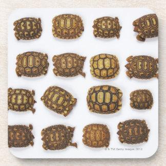 Baby tortoises arranged in rows beverage coasters