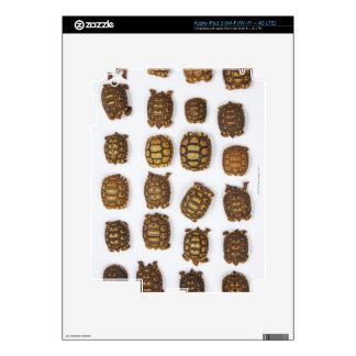 Baby tortoises arranged in rows decal for iPad 3
