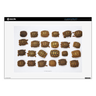 Baby tortoises arranged in rows decal for laptop
