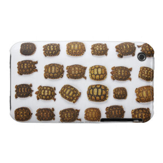 Baby tortoises arranged in rows iPhone 3 covers
