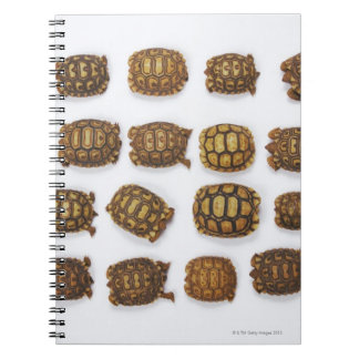 Baby tortoises arranged in rows note books