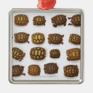Baby tortoises arranged in rows ornament