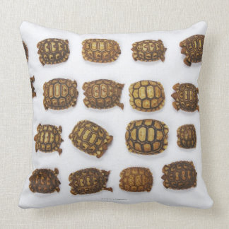 Baby tortoises arranged in rows pillow