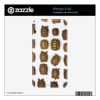 Baby tortoises arranged in rows skin for iPhone 4S