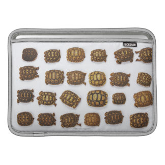 Baby tortoises arranged in rows sleeves for MacBook air