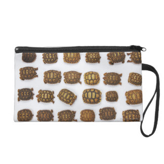 Baby tortoises arranged in rows wristlet purse
