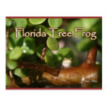 Baby Tree Frog in Bonsai plant with text Postcard