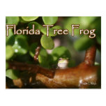 Baby Tree Frog in Bonsai plant with text Post Cards