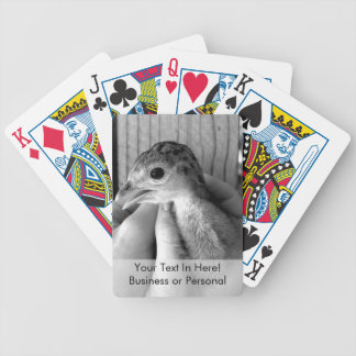 baby turkey bw in hands bicycle playing cards