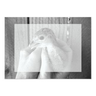 "baby turkey bw in hands 5"" x 7"" invitation card"