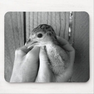 baby turkey bw in hands mouse pad