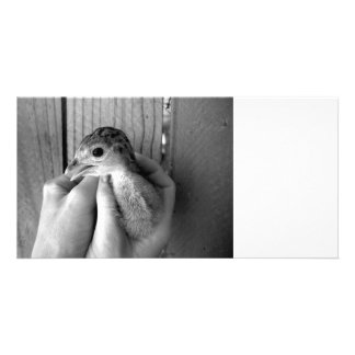 baby turkey bw in hands custom photo card