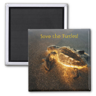 Baby Turtle 2 Inch Square Magnet